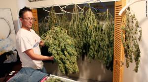 marijuana-growing