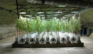 pot_growing